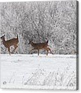 Deer Parade Acrylic Print