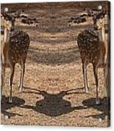 Deer Symmetry  Acrylic Print