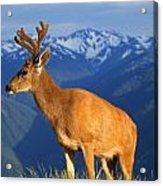Deer With Antlers, Mountain Range In Acrylic Print