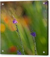 Delicate And Vivid Acrylic Print