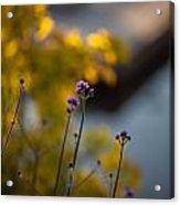 Delicate Bursts Of Purple Acrylic Print