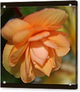 Delicate Peach Bloom Acrylic Print