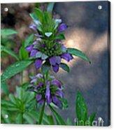 Delicate Purple Flowers-2012 Acrylic Print