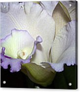 Delicate Purple Orchid Acrylic Print