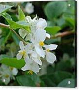 Delicate White Flower Acrylic Print