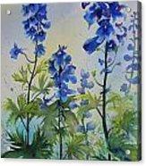 Delphiniums Acrylic Print