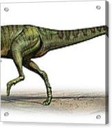 Deltadromeus Agilis, A Prehistoric Era Acrylic Print