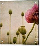Depth Of Poppy Field Acrylic Print by Priska Wettstein