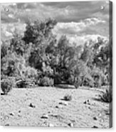 Desert Cloud Bw Palm Springs Acrylic Print