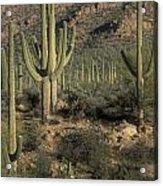 Desert Guardians Acrylic Print