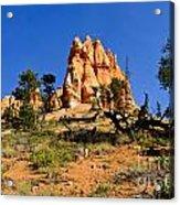Desert Landscape Le Acrylic Print