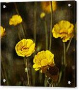 Desert Marigold Acrylic Print