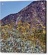 Desert Yellow Acrylic Print