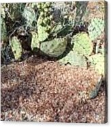 Desert's Collection Of Dried Flowers1 Acrylic Print