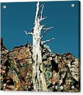 Desolation Wilderness Tree 2 Acrylic Print