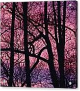 Detail Of Bare Trees Silhouetted Acrylic Print