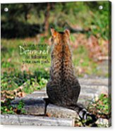 Determined Encouraging Cat Photo Acrylic Print