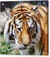 Detroit Tiger Acrylic Print