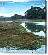 Devoran River Acrylic Print