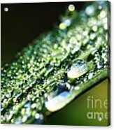 Dew On Grass Acrylic Print