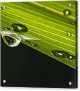 Dew On Leaf, Germany Acrylic Print