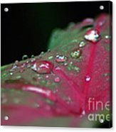 Dew On The Leaves Acrylic Print