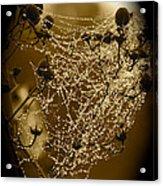 Dewdrop Cameo Acrylic Print