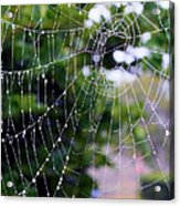 Dewdrops Dimension Acrylic Print
