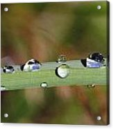 Dewdrops On Leaf Acrylic Print