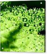 Dewdrops On Leaf Acrylic Print