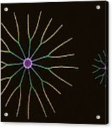 Diatom Algae, Sem Acrylic Print by Steve Gschmeissner