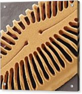 Diatom Frustule, Sem Acrylic Print
