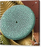 Diatoms, Sem Acrylic Print