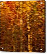 Did You Say Trees Acrylic Print