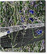 Digital Daisies Acrylic Print
