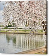 Digital Liquid - Cherry Blossoms Washington Dc 6 Acrylic Print by Metro DC Photography