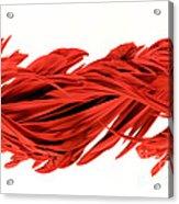 Digital Streak Image Of A Poinsettia Acrylic Print