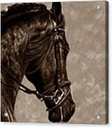 Dignified Classic Acrylic Print by Loreen Pantaleone