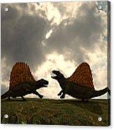 Dimetrodon Fight Over Territory Acrylic Print