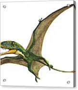 Dimorphodon Macronyx, A Prehistoric Era Acrylic Print