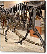 Dinosaurs At The Smithsonian Acrylic Print