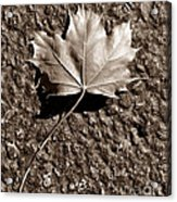Dipped In Bronze Acrylic Print