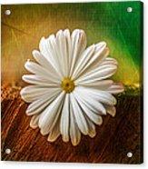 Disappearing Daisy Acrylic Print