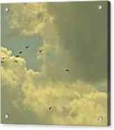 Distant Birds Acrylic Print by Naomi Berhane