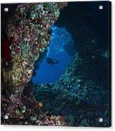 Diver At Boo Windows In Raja Ampat Acrylic Print
