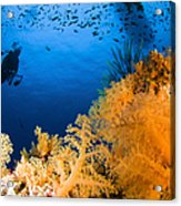 Diver Hovering Over Soft Coral Reef Acrylic Print