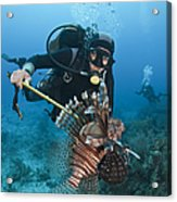 Diver Spears An Invasive Indo-pacific Acrylic Print