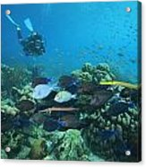 Diver Watching Blue Tangs, Doctorfish Acrylic Print by George Grall