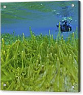 Diver With Fluorescent Green Algae Acrylic Print