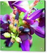 Divine Purple Acrylic Print